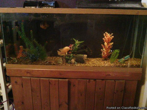 fish tank decorations 55 gallon prices 2017 - Fish Tank Maintenance