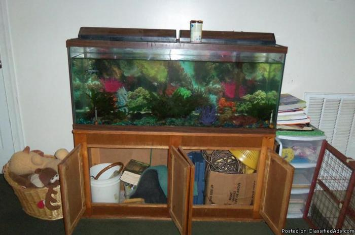 100 gallon fish tank used price deal african cichlids for Fish tank deals