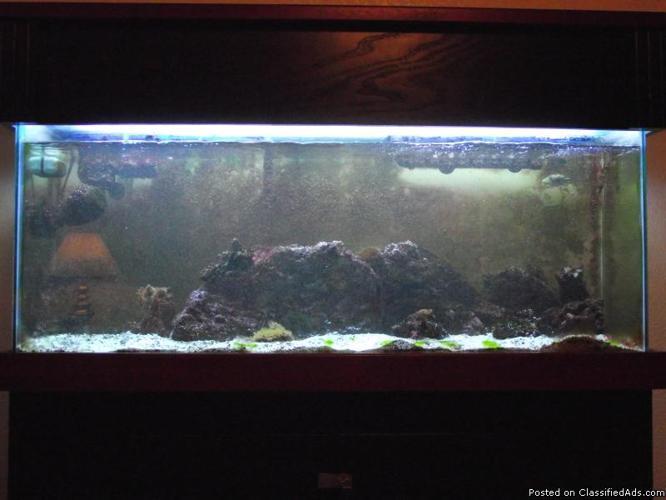 Saltwater fish tank price marine aquarium fish for sale for Fish tank price