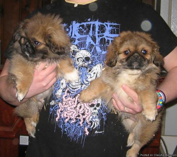 Small Dogs For Sale In Washington State