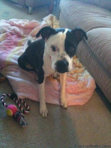 Almost 2 Year old Mix dog to good home - Price: Free