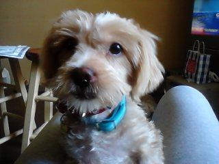Cute puppy - Price: 40