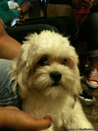 Doggy need new home - Price: 200 cash