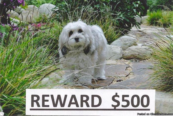 LOST DOG - $500 REWARD - Price: REWARD: $500