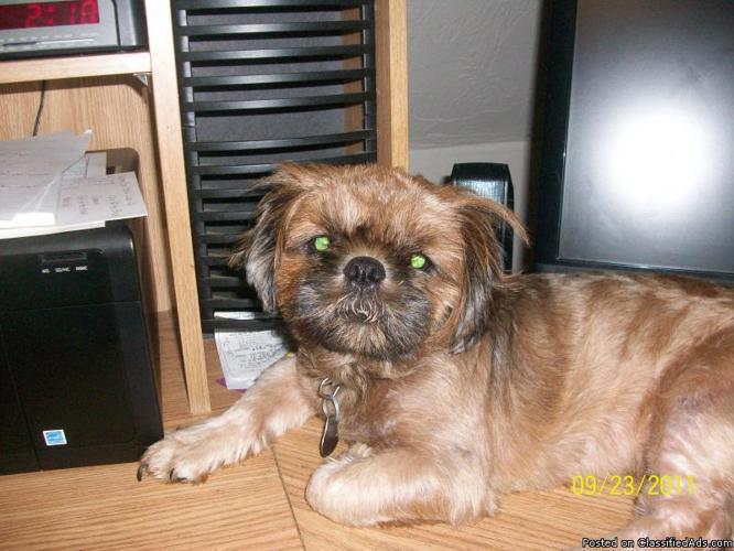 lost dog - Price: reward