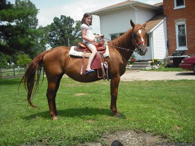 many beautiful horses and foals (1 kid safe mare) - Price: 1200