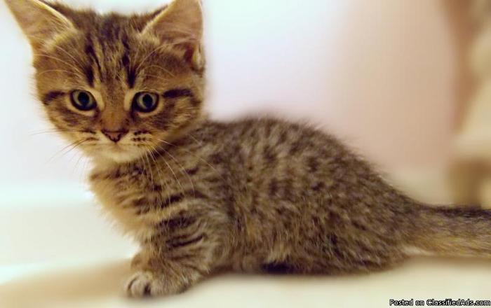 Minipaws - Hurry only ONE left - Price: $1,100