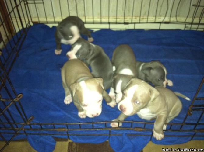 PUPPIES!!! - Price: 250