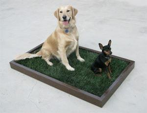 Real Grass Dog Potty Patch - Los Angeles - Dog Grass Delivery - Price: $40 per month