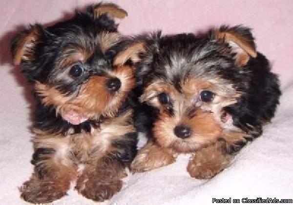 small puppies for re-homing