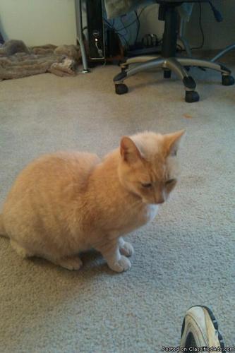 Super sweet kitty needs good home - Price: Donation for vet fee