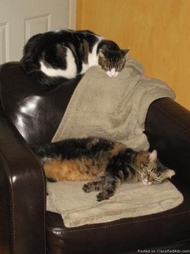 Two Adult Cats Need New Home - Price: Negotiable