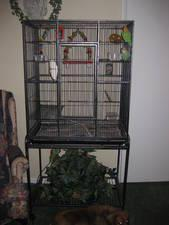 want to buy a bird cage in the beaver county area. - Price: $50.00