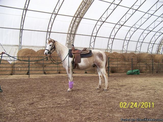 Wonderful Horses for Adoption!!