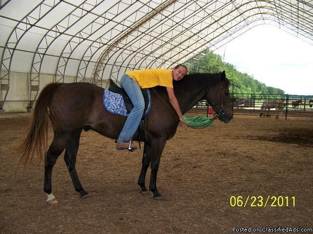 Wonderful horses for adopttion