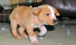I would like to introduced myself. My name is Jasper and I am a 10 weeks old male pup. I do not know my Mom & Dad, so you can call me an All American Pup. I was abandoned along side the highway when I was 4-5 weeks old, along with my 6 siblings. We were