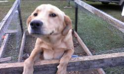 Great personality. Very energetic. House trained. Great with kids and other pets.