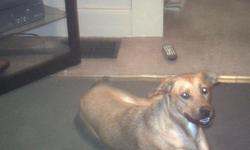Hi my name is Sandy. I am a 1 yr old female mix. I need a good home. I prefer a stay at home owner. I have a little bit of seperation anxiety. My owners work alot and I tend to get in trouble. I am great with children and other dogs. I am a bit shy but