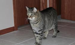 Shiloh(8yrs/Tabby) and Avery(5yrs/Tabby Mix) are in need of a new home, because my two year old son has allergies with recurring sinus infections that require antibiotics to treat. They are both litterbox trained, declawed, and neutered. Shiloh