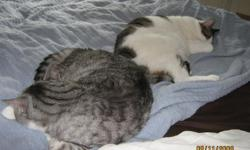 7 year-old males. Cage buddies from shelter. Handsome boy tuxedo gray and white and other boy basically white and black with patches of black and brown. Eat and sleep all day. Play with each other. Moving to Florida and only allows two pets. I also have a