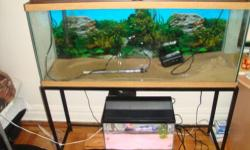 Hello, I'm selling my two fish tanks with all equipment. There is one 55 gallon, one 20 gallon. 2 aqua clear 70s bio chemical filters, 200w fluval heater for 55 gallon tank. 55 gallon tank has top cover, thermometer, large net, fish food, fluorescent