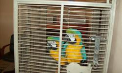 2 Blue and Gold Macaws $2,500 for the pair or make an offer 3 years old ( male and female ) Breeding Pair Comes with cage and food