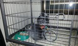 I am looking to sell 2 chinchilla brothers about 4-5 months old. they are grey and love to play with each other. i am busy alot and have no time for them so i wanna sell them to someone that would have free time for them.