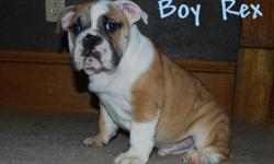 we have one male and one female left from our AKC registered litter of english bulldog puppies. We are in clarksburg wv. They are now 14 weeks old and ready to go to their new homes. We are asking 1800.00 OBO. They are fawn and white and very sweet and
