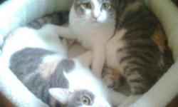 2 Calico female cats with a cage, 2 litter boxes, 2 pet beds, and play things. We are indoor cats and very playful. We've had all our shots, but we are not fixed. Our names are Tiger and Cotton. The 2nd picture is Tiger and the 3rd picture is Cotton. We