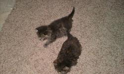 While moving a stray cat had 2 kittens in my garage. Mother left and has never returned. Approx. 6 or 7 weeks old been bottle fed, they do go in litter box. Lovable kittens, allergic to cats someone please help me out and give them good homes for