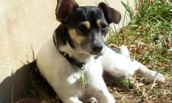 Lost on 10-2-12 Two black and white male dogs Dez and Zeb. Dez has his tags on but address and phone # is outdated. Zeb is fluffy, black and white, with a nub tail. He is a mix but not sure what kind. Dez is smaller, black and white, rat terrier mix.