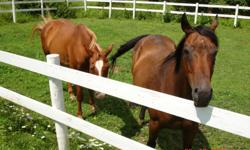 Looking for a good home for my horses. Sold farm, must find a good home for these family pets. Great trail riders.