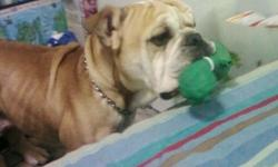 i have a male english bulldog i need to rehome. Hes a very good dog. He loves to play loves squeaky toys alot! He does not get along with other male dogs i have no idea why. We are unable to take care of him the way he needs.