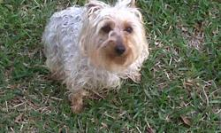 3 yr old Morkie (yorkie / maltese mix) fixed needs updated shots. our recent job / schedule changes will not allow us to care for this great family dog like she deserves. looking for another family to take this sweet girl in and love it. partial house