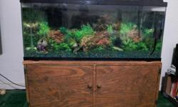 GREAT DEAL : 55 Gallon Fish Tank Comes With Hood.. Lights.. And Filter System.. The Wood Stand Is Hand Made.. Heavy Duty.. Has Lots Of Storage Room.. And Can add Wheels On Bottom For Easier Moving Access.. If Interested call : --