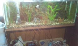 i have a 55 gallon fish tank and stand for sale, it comes with everything i have for it including everything to set up your tank for fresh water fish, some for salt water. everything i have is worth of $700.00 this is a great deal, you cant go wrong, im