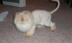 I am selling my 5 year old male persian cat Oliver. He has been spayed/neutered and is up to date on all shots. We purchased a 1 year health plan for him in April which was $372. This covers all routine shots and assists with blood work, dental cleanings