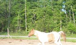 HE HAS BEEN TRAINED .UP TO DATE ON SHOTS AN COGGINS . GREAT TRAIL HORSE. MORE INFO CALL 423-949-5529 CELL 423-421-6242