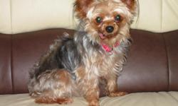 6 years old Yorkie, female, very friendly, house trained. Vet required. Adoption fee $150. Cell: (386)237-fourzero-sixfive