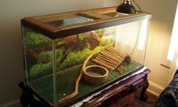 This adult Ball Python comes with a 75 gallon Aquarium, two heating pads, a day light with a timer, and everything you see inside the aquarium including the Ball Python's water bowl. (The table beneath the tank is not included) The Python is an adult