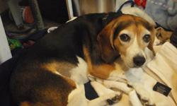 I have a 7 year old female beagle named Maggie and she needs a new home. She is spayed and has all her shots up to date. She is a very good dog, she is quiet, sweet, and well mannered. She comes when called and can be off her leash and does not run off.