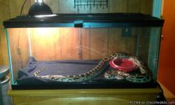 For sale is an 8ft Burmese python her name is Rebecca and she is great have ahd her for 3 yrs with no problems except we have 2 cats that she wants plus I just got a puppy for my daughter and time for her is brief looking for a good home for her to some