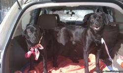 very nice loving dogs good with kids and other dogs.one male and female