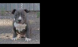 We only have 3 Pups left, They are 2 months old, and ready to go to a good home. For Pedigree information please Visit www.FeltusBullys.com