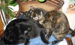 Brother and sister, five months old need secure forever home for one or both. Call --. (Whidbey Island)