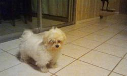 I have an absolutely adorable 5 month old male Maltese puppy for sale. This little guy is extremely affectionate and very social.  He is Continental Kennel Club papered and both parents weigh between 5-6lbs.  All puppy shots have been given.