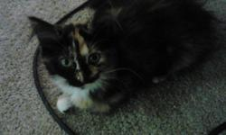 **FREE** 2 Adorable Calico kittens approx 2 months old (sisters from same litter) were abandoned and need a loving family, would be nice if they could stay together, but ok if seperated. They are litter trained, both females, one long hair/calm