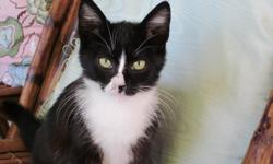 We are looking for loving permanent homes with a garden for two charming outdoor/indoor kittens: ? ?Mr. Bookend?, a male ?Tuxedo? with a roguish white mark on his nose ? ?Mrs. Bookend?, a female ?Tuxedo? with a little white chin under a black face They