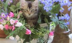 ?Leo?: male tiger mix looks a bit like a lynx ?Mr. Bookend?: male ?Tuxedo? with white marking on nose ?Mrs. Bookend?: female ?Tuxedo? black face with white chin The kittens are five months old, litter-box trained, and eat dry and canned foods. They love