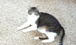 I am looking for a good home for our family cat. Her name is roxy! She is spayed and has been declawed. She loves to lay around the house. She really loves to be petted and have her belly rubbed. She is about 11 years old. If your interested please call